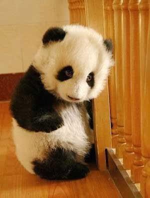 cute-panda-staircase