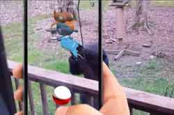 pokemon go safety tips image