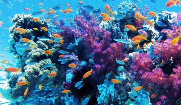anilao diving spots