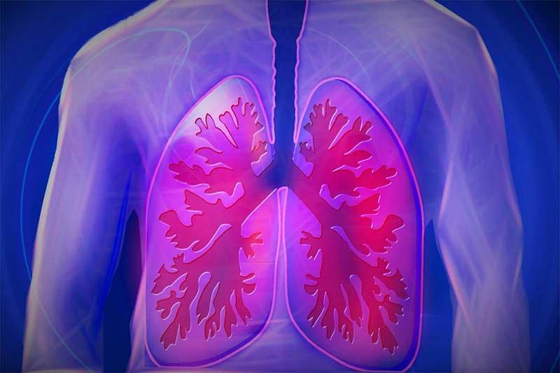 lungs internal