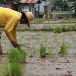 Typhoon Rolly Agriculture Damage Estimated To Be ₱1.1 Billion